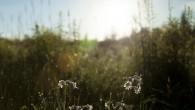 Wie letztes Jahr veranstaltet der Verschönerungsverein wieder den Blumenschmuckwettbewerb. Bis Montag den 12.08.2013 können sich […]